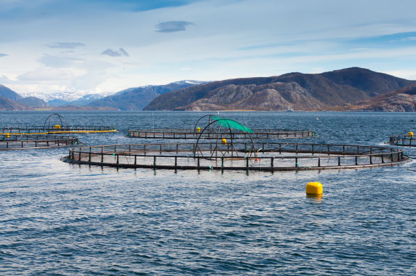 Aquaculture sector, fish farming